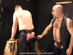 bear discipline